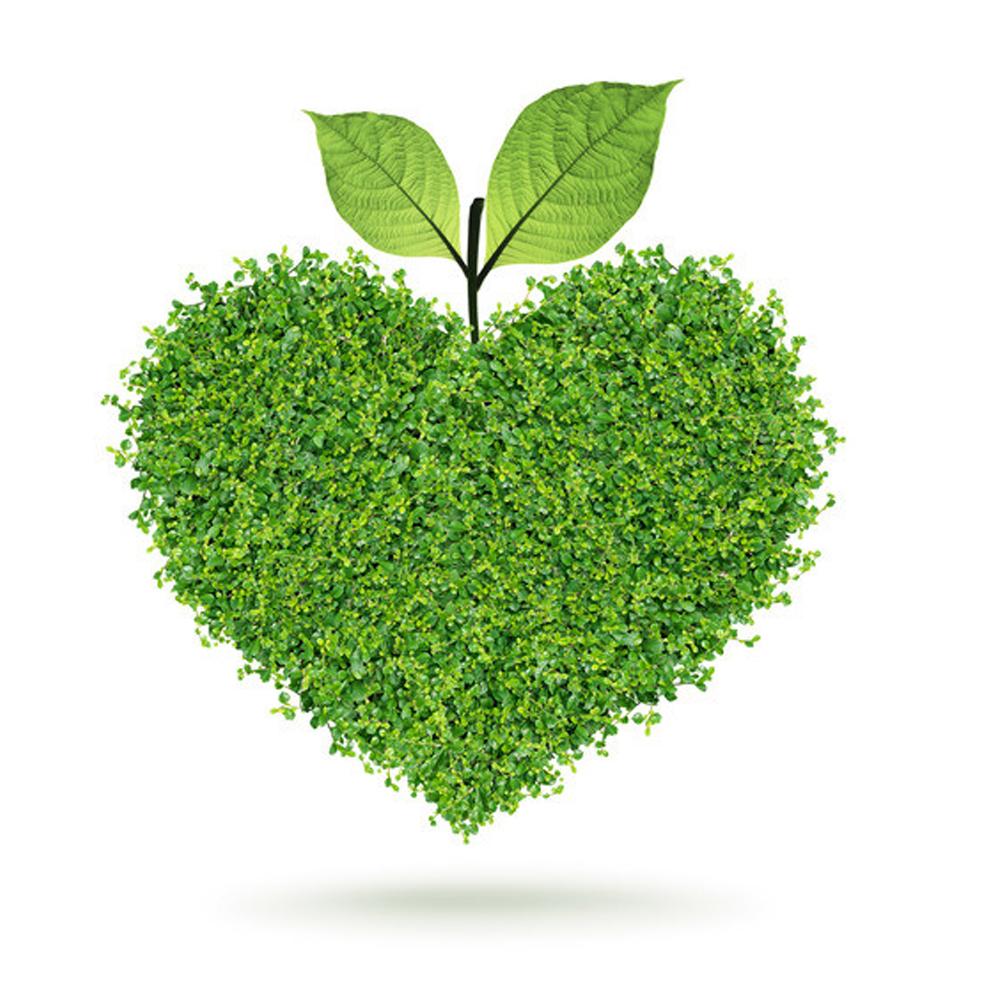 Сердце из зелени  № 1599075 загрузить